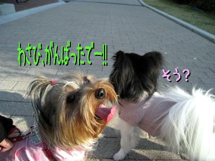 11_20090410213155.jpg