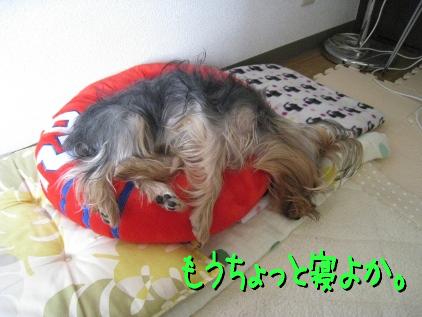 11_20090425195338.jpg