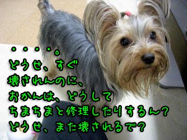 11_20090622163702.jpg