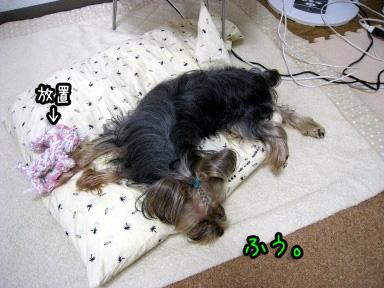 11_20090703193527.jpg