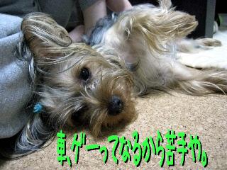 15_20090513150230.jpg
