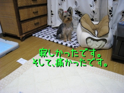 1_20090116214002.jpg