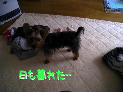 1_20090121124850.jpg