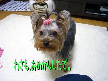 1_20090122201106.jpg