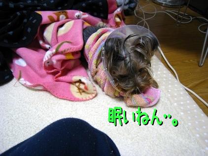1_20090124191725.jpg
