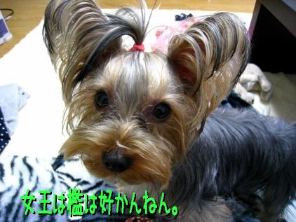 1_20090130195920.jpg