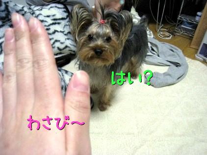 1_20090131194805.jpg