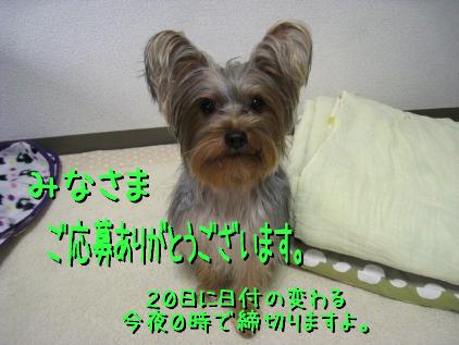 1_20090219194949.jpg