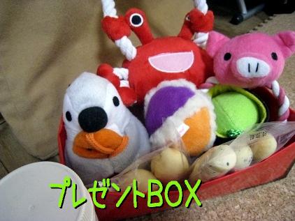1_20090302202451.jpg