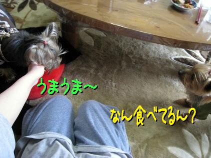 1_20090325145449.jpg