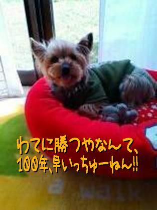 1_20090329174323.jpg