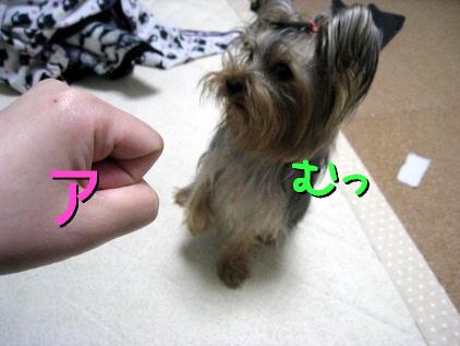 1_20090407202727.jpg
