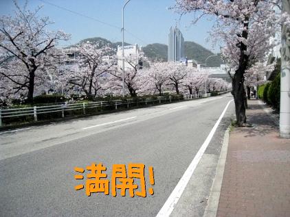 1_20090409185137.jpg
