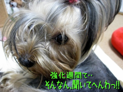 1_20090410213121.jpg