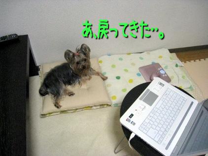 1_20090416180644.jpg