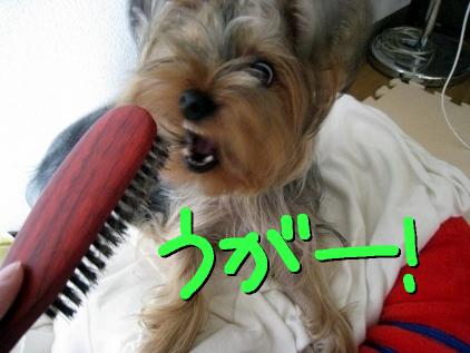 1_20090422160046.jpg