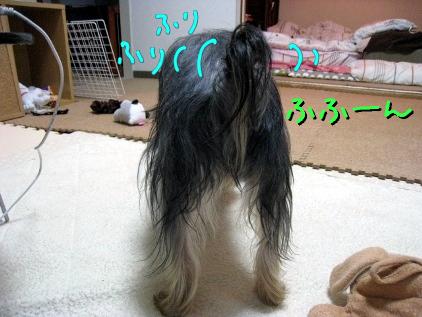 1_20090430190100.jpg