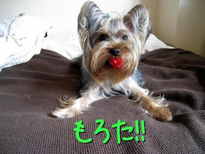 1_20090501213006.jpg