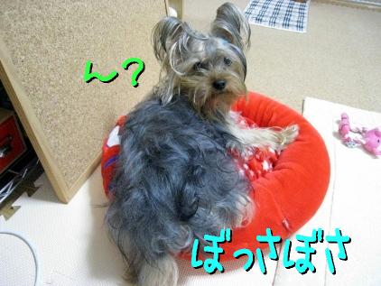 1_20090509175058.jpg
