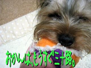 1_20090513150211.jpg