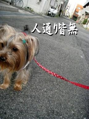 1_20090527091745.jpg