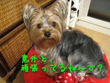 1_20090530210303.jpg
