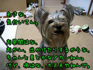 1_20090602185908.jpg