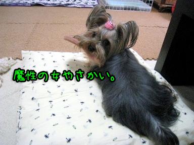 1_20090606191308.jpg