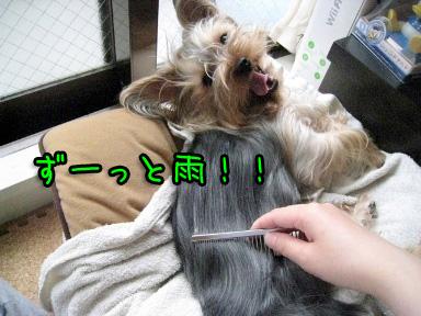 1_20090611193754.jpg