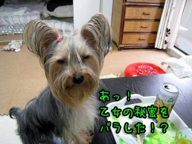 1_20090613183540.jpg