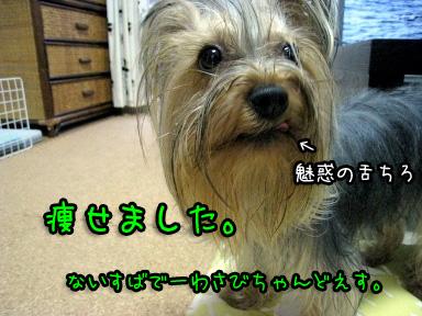 1_20090616192054.jpg