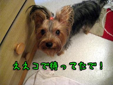 1_20090623194246.jpg