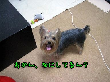 1_20090701170332.jpg