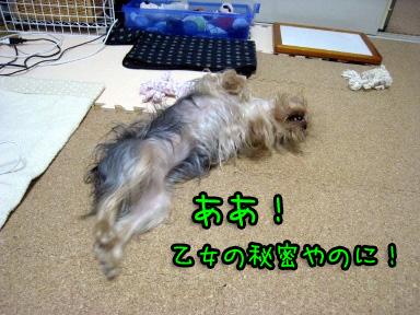 1_20090703193506.jpg