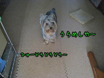 1_20090715090619.jpg