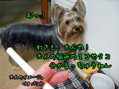 1_20090717193718.jpg