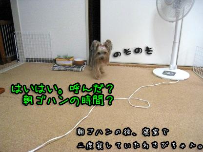 1_20090729111635.jpg