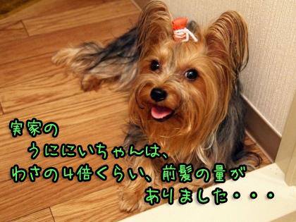 1_20090824201300.jpg