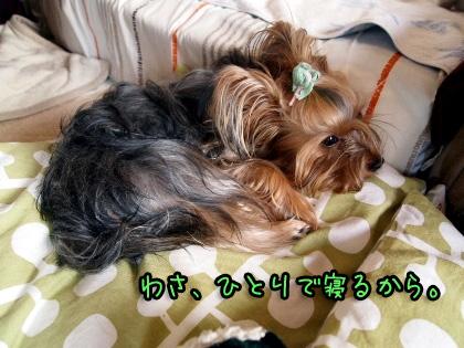 1_20090825192541.jpg