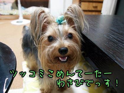 1_20090830144509.jpg
