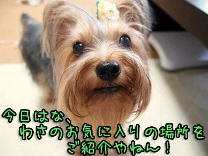 1_20090905202125.jpg