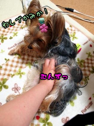1_20091005175931.jpg
