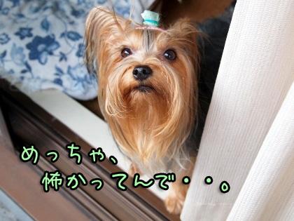 1_20091008192605.jpg