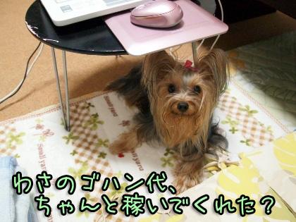 1_20091012191038.jpg
