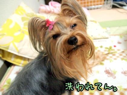 1_20091015195443.jpg