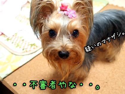 1_20091024192427.jpg