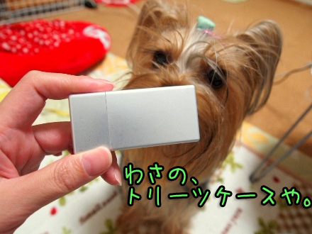 1_20091113201550.jpg