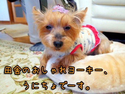 1_20091117193253.jpg