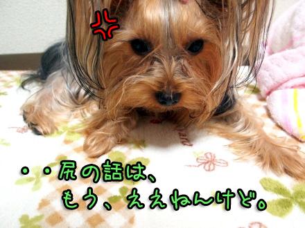 1_20091119190504.jpg