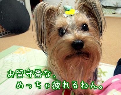 1_20091205190851.jpg